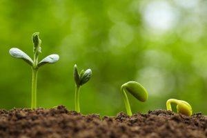nawozy do roślin